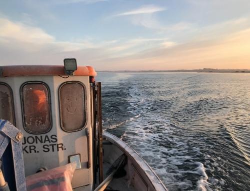 Hvad ved vi om havmiljøets tilstand i Lillebælt?