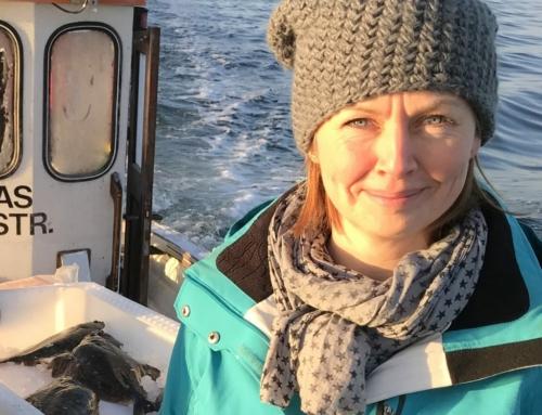 Naturpark Lillebælt vil skabe balance i havet – flere torsk og færre krabber