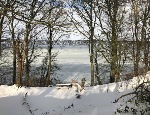 Naturparken i vinterferien :-)